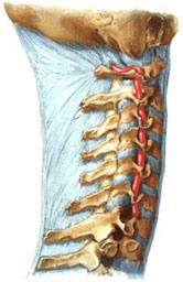Боль в шейном отделе позвоночника и голове